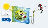 Schematische Darstellung der Photofuel-Methode: In Photobioreaktoren werden Mikrobenzellen gezüchtet. Die Zellen wandeln Solarenergie, Wasser und Kohlenstoffdioxid zu motorfähigen Kraftstoffen um. Abbildung: Klaus Lenz, SYNCOM