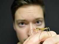 Der Biologe Chris Dallmann arbeitet mit Stabheuschrecken. Sie sind bis zu acht Zentimeter lang. Anders als Heuschrecken können sie nicht springen, sondern nur gehen und klettern. Sie ähneln kleinen Ästen und sind so vor Fressfeinden getarnt. Foto: CITEC/Universität Bielefeld