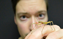 Biologist Chris Dallmann works with stick insects.