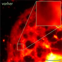 Die Aufnahme zeigt eine Leberzelle vor und nach der Auswertung der Daten durch die an der Universität Bielefeld entwickelten Software. Foto. Universität Bielefeld