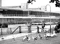Ein Bild aus dem Gründungsjahr 1976: Im Freigehege der Verhaltensforschung waren übergangsweise Magellangänse untergebracht. Foto: Gräfenstein