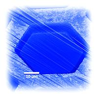 Diese Kohlenstoff-Nanomembran hat Professor Gölzhäusers Arbeitsgruppe mit Hilfe der Elektronenquelle hergestellt. Das Bild wurde mit einem Helium-Ionen-Mikroskop aufgenommen und anschließend eingefärbt. Foto: Universität Bielefeld