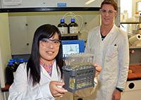 Keiko Oike und ihr Kollege Philipp Rom-melmann haben für ihre Studie die Vari-anten eines Nitrils mittels Kieselerde iso-liert.