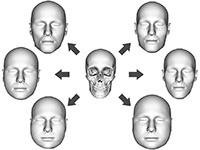 Das neue Computermodell kann aus einem gegebenen Schädel interaktiv mehre Gesichtsvarianten rekonstruieren, die sich in der Hautdickeverteilung unterscheiden. Foto: Universität Bielefeld/Hochschule RheinMain