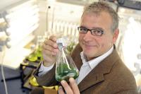 Ein Team um Prof. Dr. Olaf Kruse von der Universität Bielefeld sucht nach der perfekten Mikroalge für das Kooperationsprojekt. Foto: Sandra Sanchez / Bielefeld Marketing GmbH