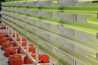 Forscher der Universität Bielefeld haben die Mikroalgen mit ausgewählt, die im australischen Klima optimal gedeihen. Foto: University of Queensland