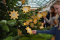 Mehr als 500 Wunschsterne gibt es in diesem Jahr. Foto: Universität Bielefeld