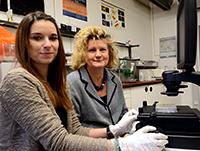 Doktorandin Janine Müller und Prof. Dr. Barbara Kaltschmidt (v. l.) haben die Zellen für die Parkinson-Studie vorbereitet und ausgewertet. Foto: Universität Bielefeld