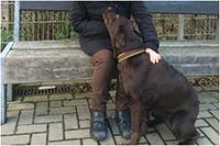 Die Begegnung mit einem Hund: Einer Bethel-Bewohnerin wurde dieser Wunsch erfüllt.