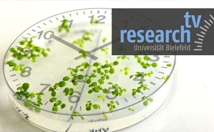 Inner clock of plants Copyright: Bielefeld University