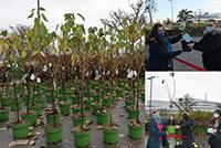 Rund 400 Apfel- und Kirschbäume warten auf dem CeBiTec-Parkplatz auf ihre Abholung. Jeannette Toumli (Wirtschaftswissenschaften) erhält ihren Zwergapfelbaum von der Auszubildenden Lea-Luisa Reschke (P/O.5). Dr. Maren Panhorst (Biologie) übernahm ihren getopften Kirschbaum von Landschaftsgärtner Markus Pisching und der Auszubildenden Maike Hövelmann (P / O.5 ).  Collage: Universität Bielefeld